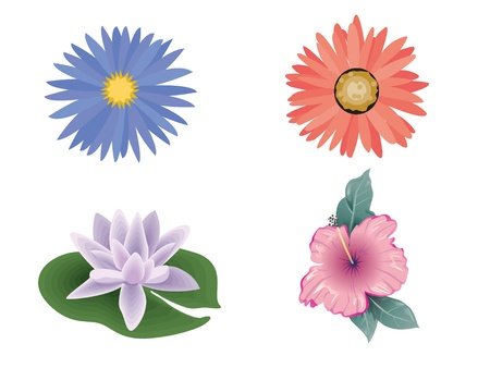 collage with colorful flowers isolated  photo
