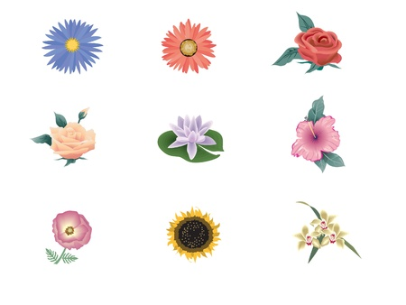 Set of beautiful flowers  Vector illustration