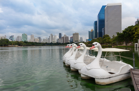 pedal: Swan  shaped pedal boat in the park