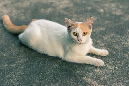 viewfinderchallenge3: Cat Looking At Camera