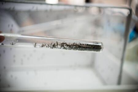 mosquito vaccine test.