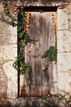 old wooden door overgrown with ivy photo