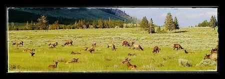 Yellowstone - wild peace 版權商用圖片