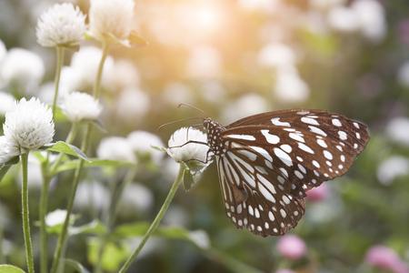 Butterfly on a flower in a flower garden.