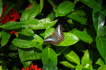 a nocturne: Butterfly on a plant at the Butterfly Garden at the Singapore Airport