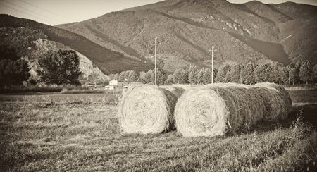 Bales of Hay in a Tuscan Meadow, Italy Stock Photo - 12172042