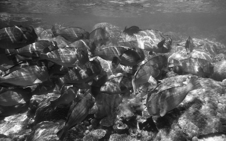 Underwater Scene of Great Barrier Reef in Queensland, Australia Stock Photo - 12160997