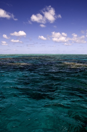 port douglas: Surface of the Great Barrier Reef near Port Douglas, Australia
