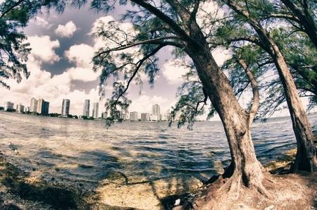 Vegetation of Hobie Island Beach Park in Miami, U S A  photo