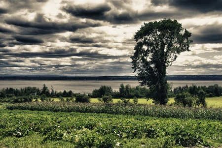 Vegetation and Colors of Quebec Countryside, Canada photo