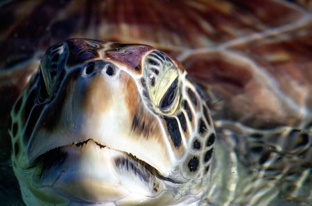 Sea Turtle Eyes and Face, Grand Cayman Stock Photo - 13563274