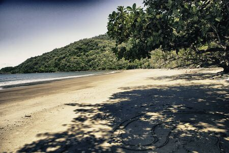 tribulation: Vegetation and Colors of Cape Tribulation in Australia