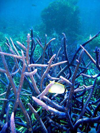 Underwater Scene of Great Barrier Reef in Queensland, Australia photo