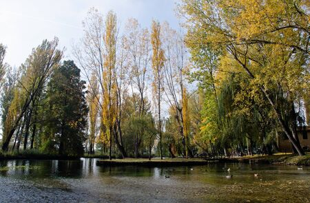 Vegetation of Fonti del Clitunno Park in Umbria, Italy photo