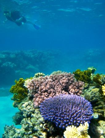 Escena subacuática del Gran Barrera de Coral en Queensland, Australia