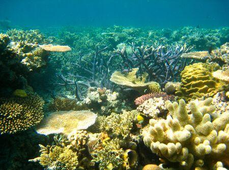 arrecife: Escena subacuática del Gran Barrera de Coral en Queensland, Australia
