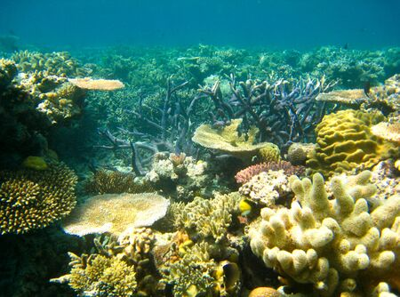 Underwater Scene of Great Barrier Reef in Queensland, Australia photo