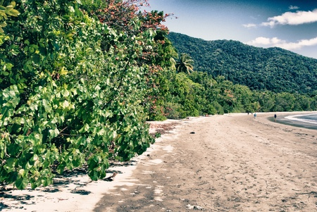 Vegetation and Colors of Cape Tribulation in Australia photo