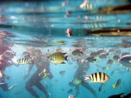 barrier: Underwater Life of Great Barrier Reef, Australia Stock Photo