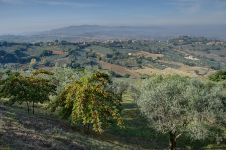 Countryside and Vegetation in Umbria, Italy photo