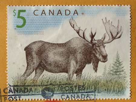 canada stamp: Canadian postage stamp from Canada with deer moose