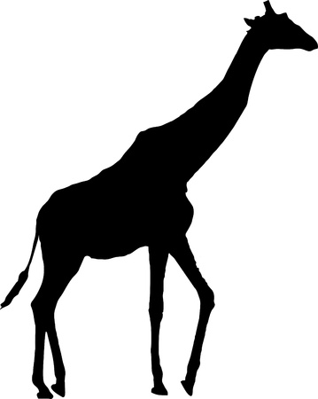 animal silhouette: giraffe silhouette - isolated vector illustration