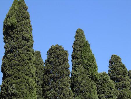 groove: Cypresses groove in Mediterranean Italy