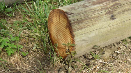 wood cut: Wood log cut useful as a background