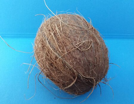 cocos: Coconut (cocos nucifera) nut over light blue background