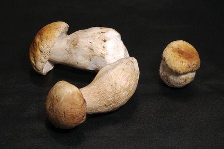 paddestoel, de eekhoorn brood, bronskleurig edulis  Stockfoto - 1290246