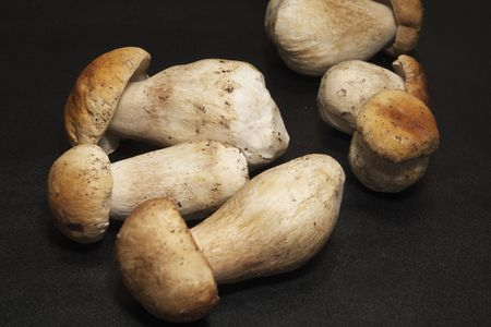 mushroom, squirrels bread, Boletus edulis photo