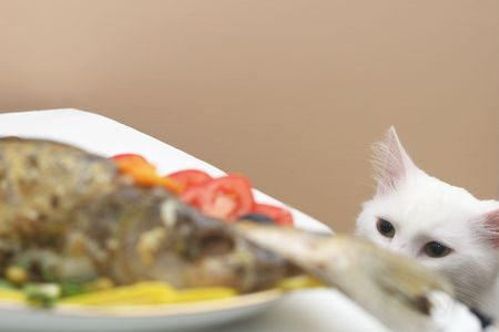 baked fish and cat photo