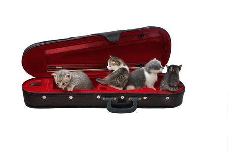 kitten quartette Stock Photo - 8838230