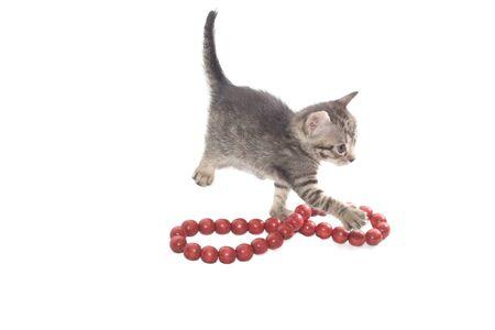 Sweet little Cats Stock Photo - 8838170