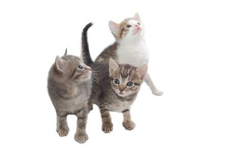 Three imaginary kitten Stock Photo - 8838173