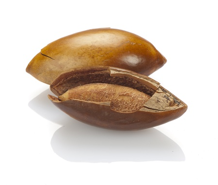 seed or seeds of sapote  isolated on white