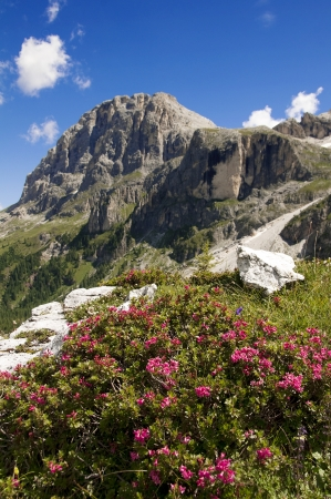 Dolomiti near San Martino di Castrozza,Trentino,Italy Stock Photo