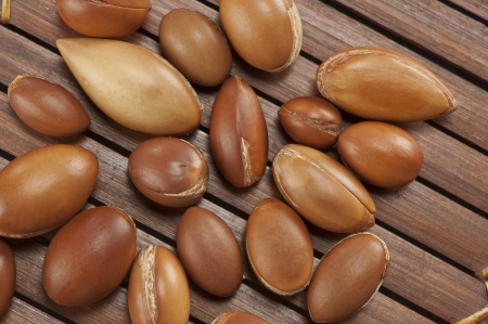 seeds of argan,Morocco plant,a close up