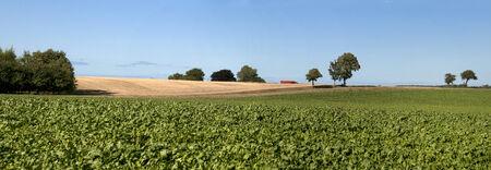 Denmark landscape,  fields