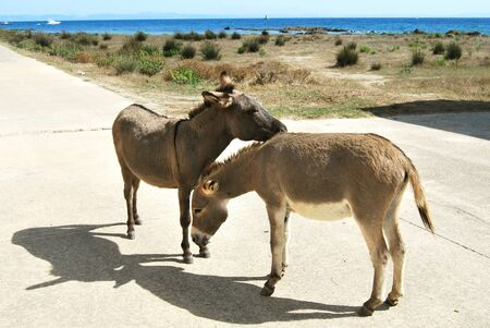 holidays vacancy: donkeys