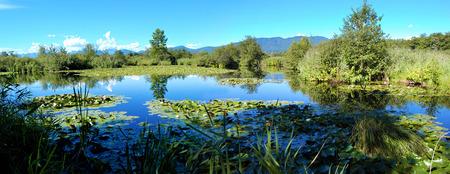 brabbia natural reserve photo