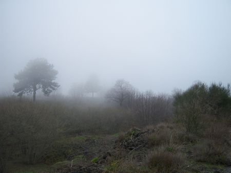 trees in the dense fog in the morning photo