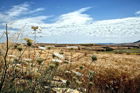 landscape with flowers Banco de Imagens