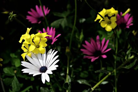 spring flowers in the dark Banco de Imagens