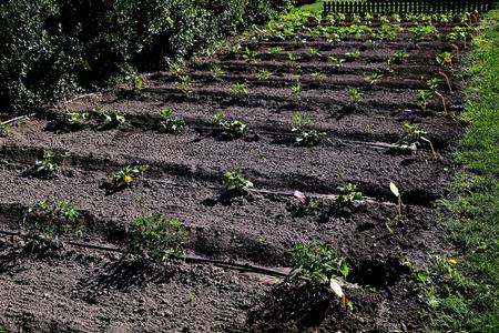 vegetable garden view Banco de Imagens