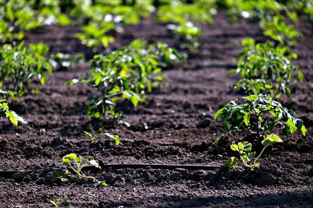 close view of a vegetable garden Banco de Imagens