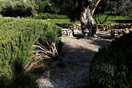 Vegetable garden Orto dei Cappuccini in Cagliari, driveways