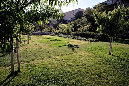vegetable garden Orto dei Cappuccini in Cagliari, view of the orchard