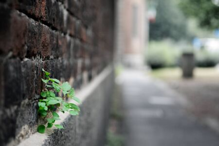 seedling in a wall
