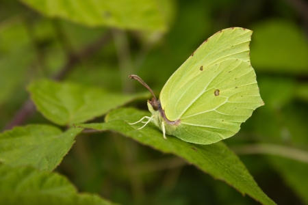 camouflaged: butterfly camouflaged by leaf